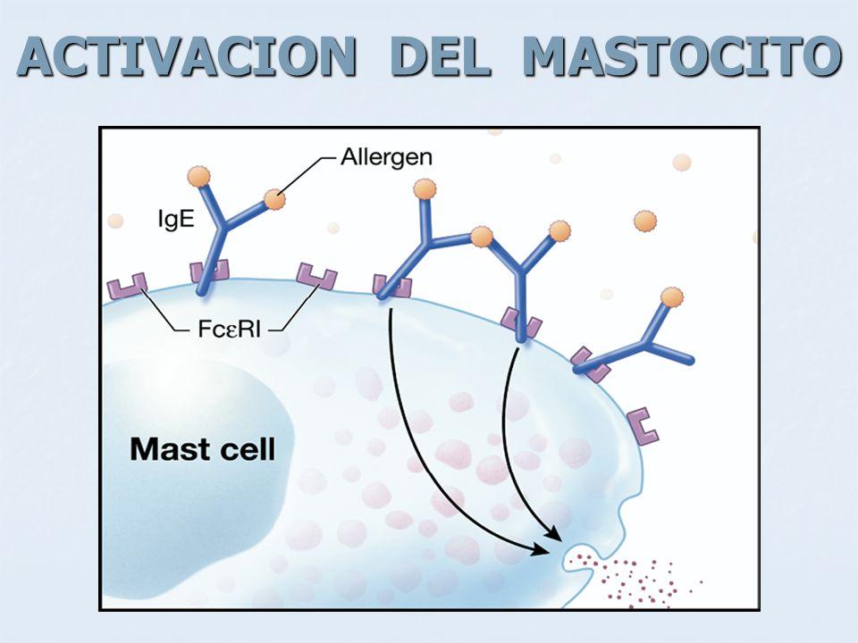 ACTIVACION DEL MASTOCITO