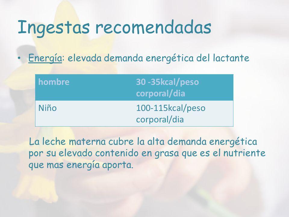 Ingestas recomendadas Energía: elevada demanda energética del lactante La leche materna cubre la alta demanda energética por su elevado contenido en grasa que es el nutriente que mas energía aporta.