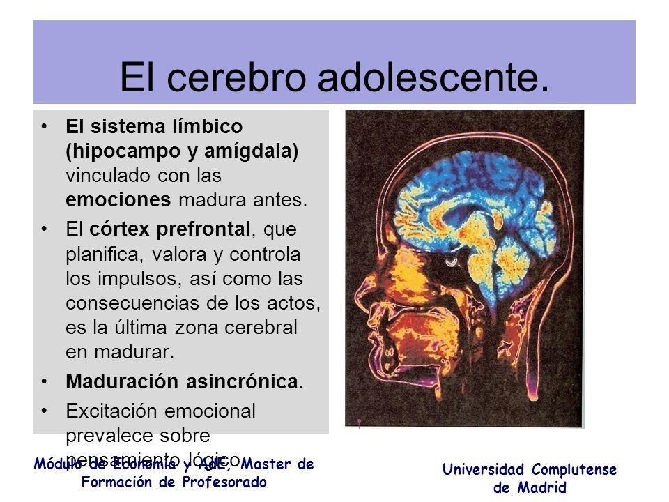 El cerebro adolescente. El sistema límbico (hipocampo y amígdala) vinculado con las emociones madura antes. El córtex prefrontal, que planifica, valor