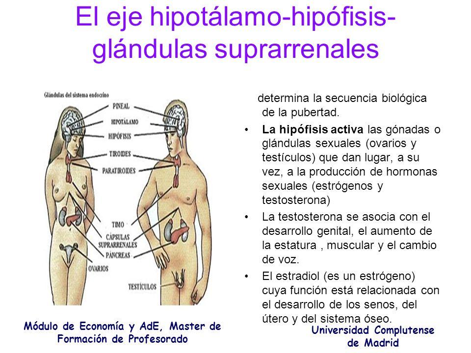 El eje hipotálamo-hipófisis- glándulas suprarrenales determina la secuencia biológica de la pubertad. La hipófisis activa las gónadas o glándulas sexu