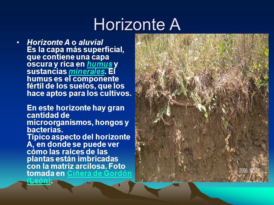 Horizonte A Horizonte A o aluvial Es la capa más superficial, que contiene una capa oscura y rica en humus y sustancias minerales. El humus es el comp