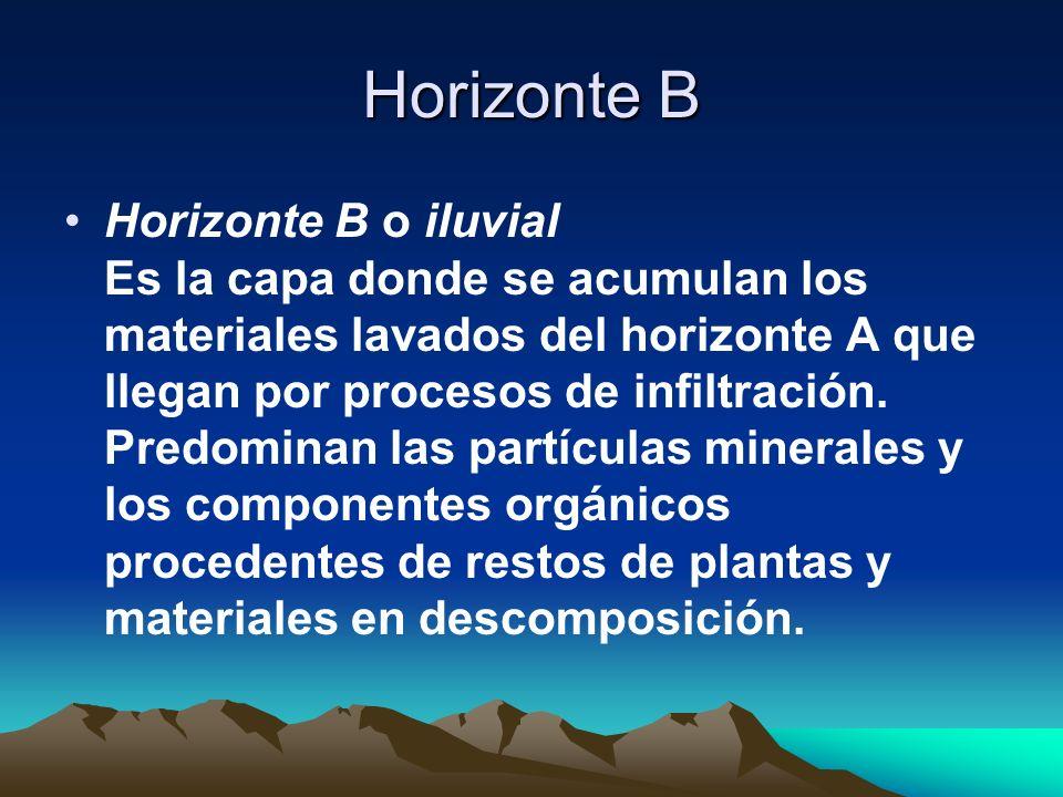 Horizonte B Horizonte B o iluvial Es la capa donde se acumulan los materiales lavados del horizonte A que llegan por procesos de infiltración. Predomi