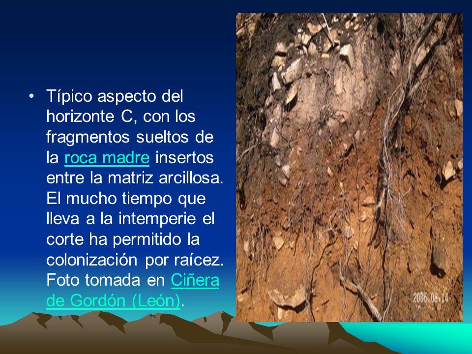 Típico aspecto del horizonte C, con los fragmentos sueltos de la roca madre insertos entre la matriz arcillosa. El mucho tiempo que lleva a la intempe