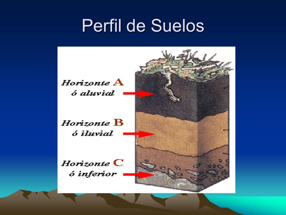 Horizonte A Horizonte A o aluvial Es la capa más superficial, que contiene una capa oscura y rica en humus y sustancias minerales.