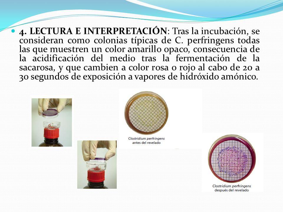 4. LECTURA E INTERPRETACIÓN: Tras la incubación, se consideran como colonias típicas de C. perfringens todas las que muestren un color amarillo opaco,