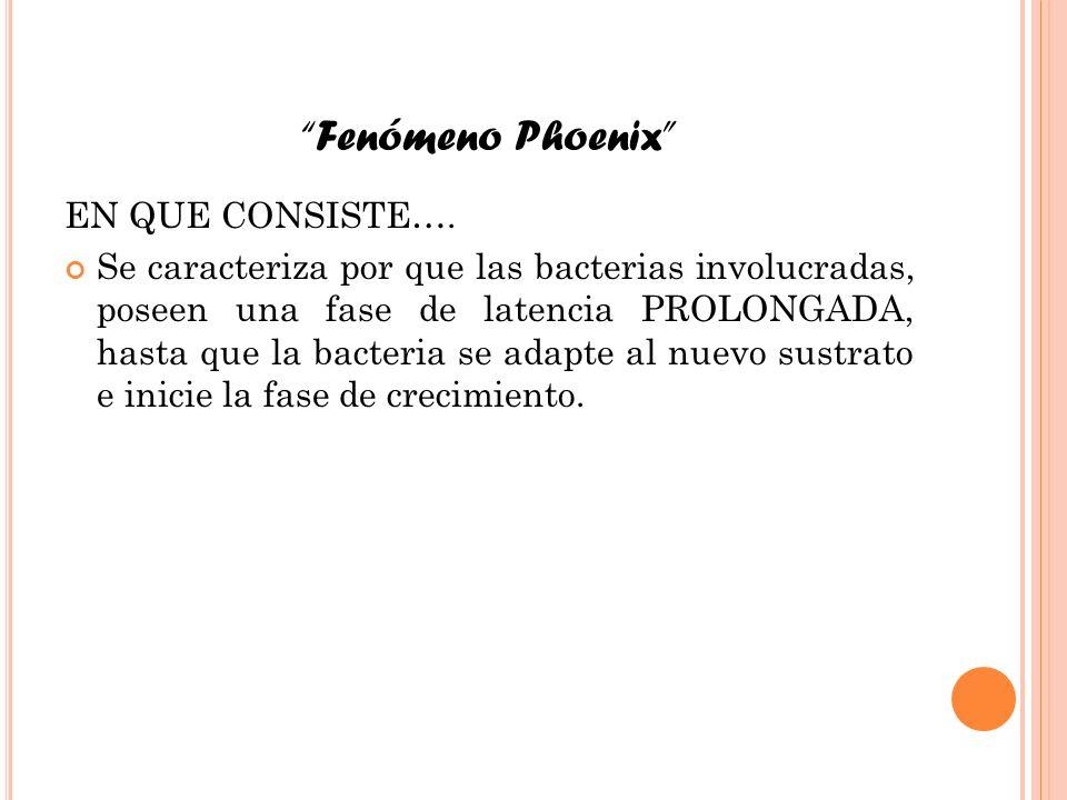Fenómeno Phoenix EN QUE CONSISTE…. Se caracteriza por que las bacterias involucradas, poseen una fase de latencia PROLONGADA, hasta que la bacteria se