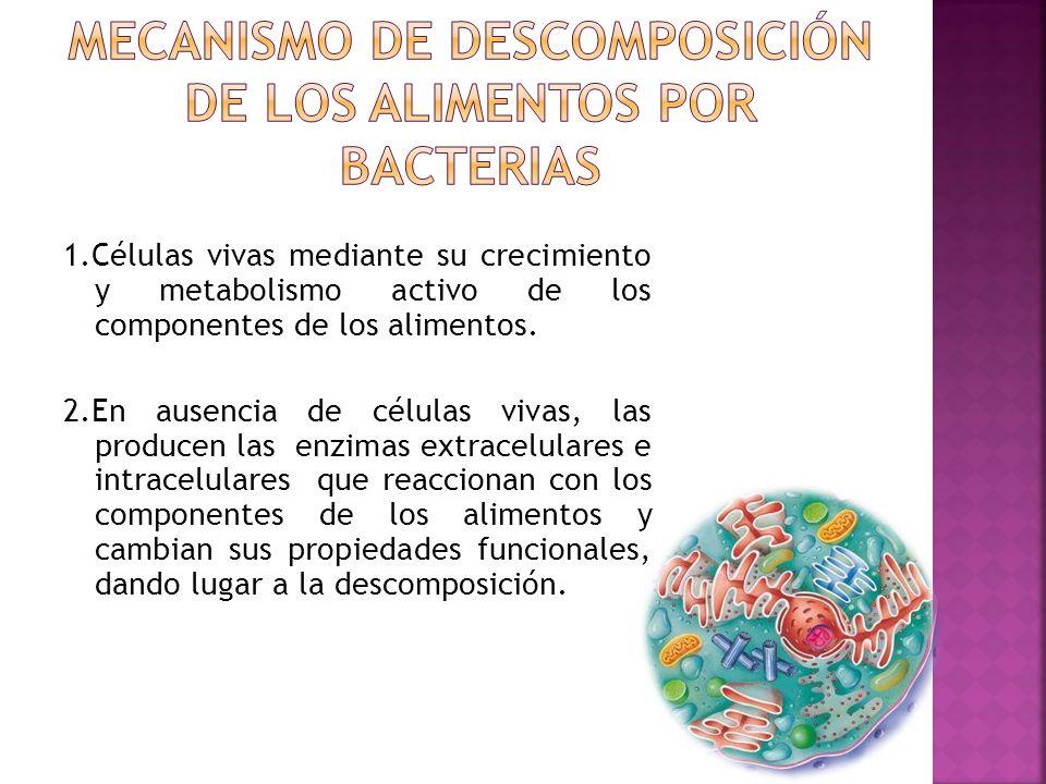 1.Células vivas mediante su crecimiento y metabolismo activo de los componentes de los alimentos. 2.En ausencia de células vivas, las producen las enz