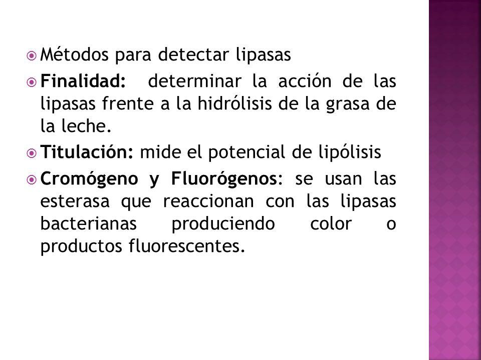 Métodos para detectar lipasas Finalidad: determinar la acción de las lipasas frente a la hidrólisis de la grasa de la leche. Titulación: mide el poten