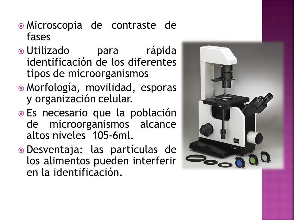 Microscopia de contraste de fases Utilizado para rápida identificación de los diferentes tipos de microorganismos Morfología, movilidad, esporas y org