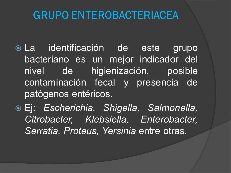 GRUPO ENTEROBACTERIACEA La identificación de este grupo bacteriano es un mejor indicador del nivel de higienización, posible contaminación fecal y pre