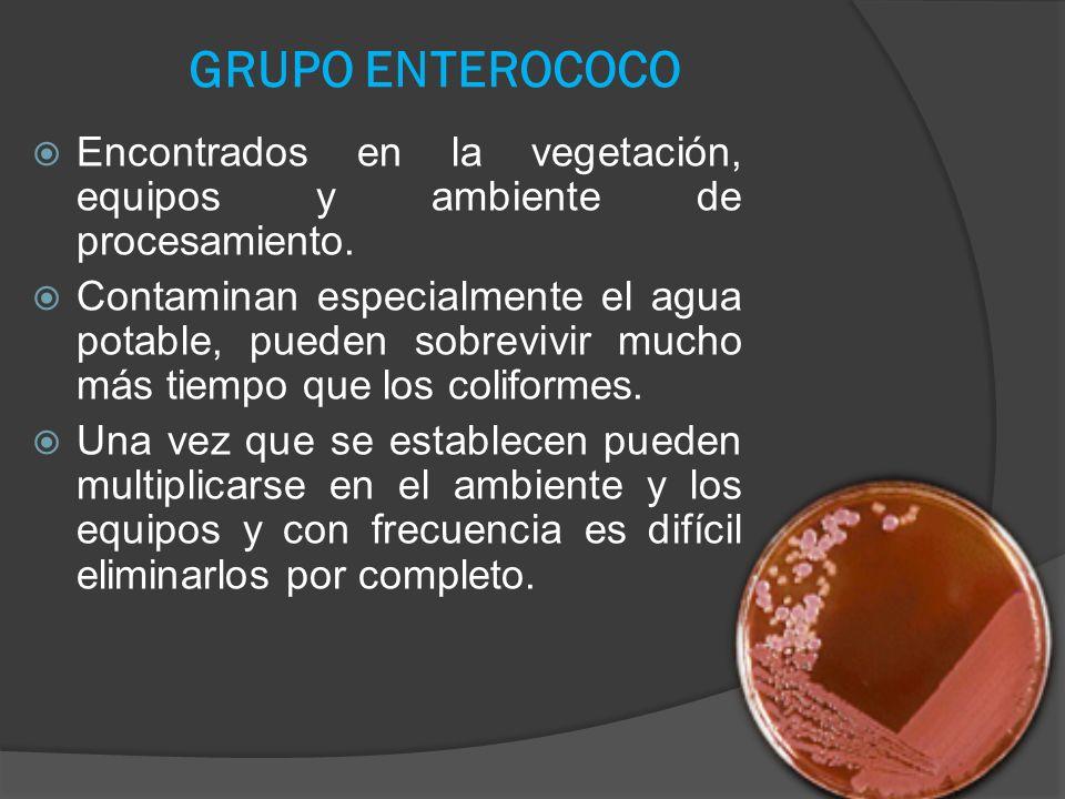 GRUPO ENTEROCOCO Encontrados en la vegetación, equipos y ambiente de procesamiento. Contaminan especialmente el agua potable, pueden sobrevivir mucho