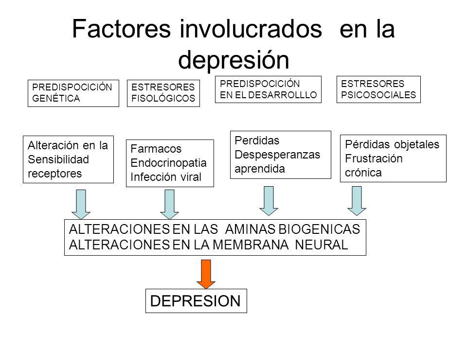 Factores involucrados en la depresión PREDISPOCICIÓN GENÉTICA ESTRESORES FISOLÓGICOS PREDISPOCICIÓN EN EL DESARROLLLO ESTRESORES PSICOSOCIALES Alterac