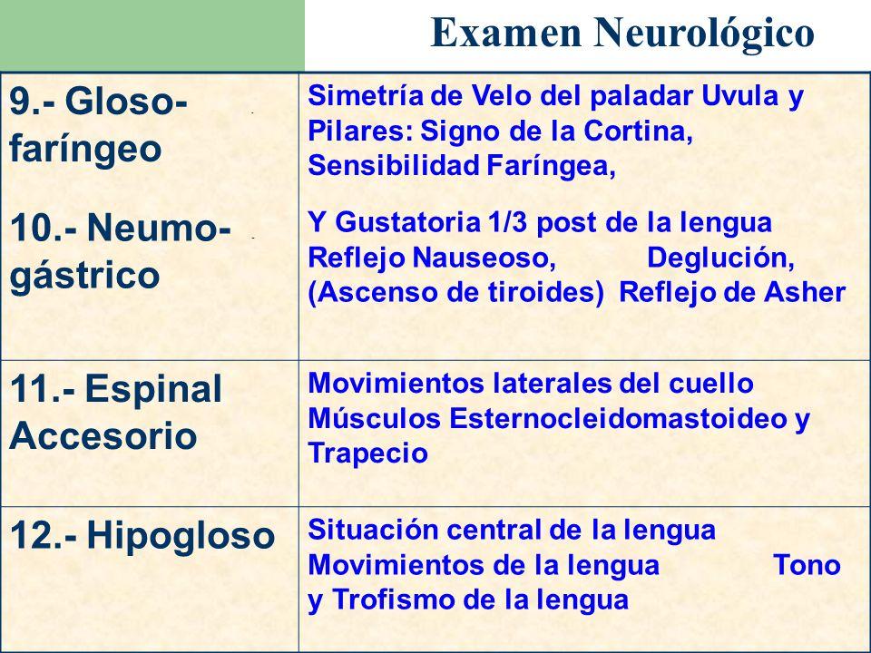 Examen Neurológico 9.- Gloso- - faríngeo Simetría de Velo del paladar Uvula y Pilares: Signo de la Cortina, Sensibilidad Faríngea, 10.- Neumo- - gástr