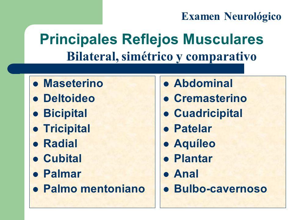 Principales Reflejos Musculares Maseterino Deltoideo Bicipital Tricipital Radial Cubital Palmar Palmo mentoniano Abdominal Cremasterino Cuadricipital