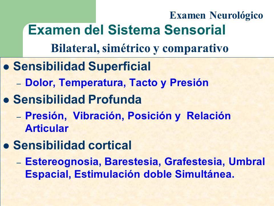 Examen del Sistema Sensorial Sensibilidad Superficial – Dolor, Temperatura, Tacto y Presión Sensibilidad Profunda – Presión, Vibración, Posición y Rel