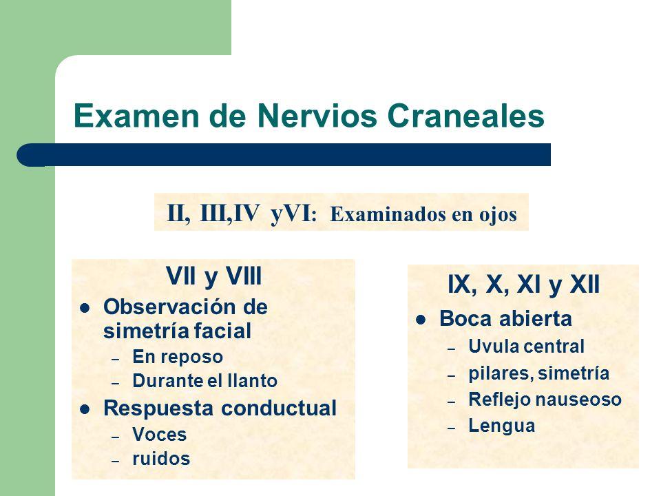 Examen de Nervios Craneales IX, X, XI y XII Boca abierta – Uvula central – pilares, simetría – Reflejo nauseoso – Lengua VII y VIII Observación de sim