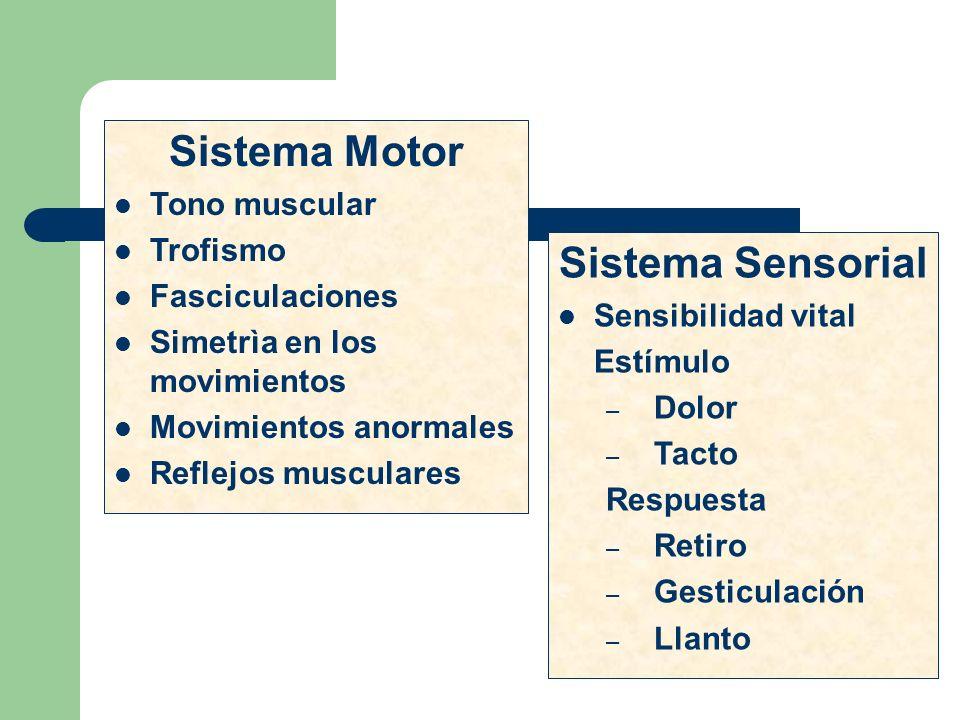 Sistema Motor Tono muscular Trofismo Fasciculaciones Simetrìa en los movimientos Movimientos anormales Reflejos musculares Sistema Sensorial Sensibili