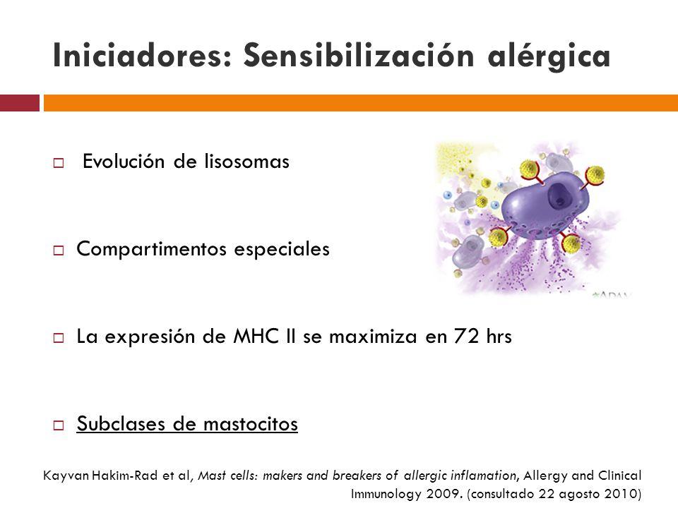 Iniciadores: comienzo de la inflamación alérgica Liberación de histamina PAF IL-B1 Kayvan Hakim-Rad et al, Mast cells: makers and breakers of allergic inflamation, Allergy and Clinical Immunology 2009.