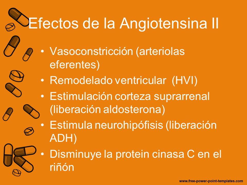 Efectos de la Angiotensina II Vasoconstricción (arteriolas eferentes) Remodelado ventricular (HVI) Estimulación corteza suprarrenal (liberación aldost