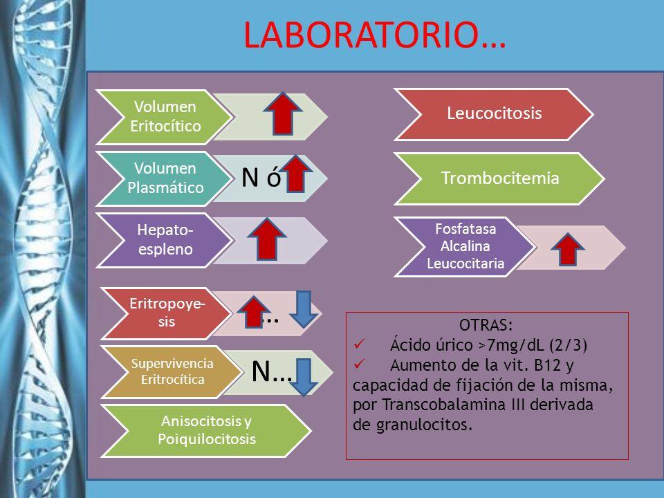 LABORATORIO… Volumen Eritocítico Volumen Plasmático N ó _ Hepato- espleno Eritropoye- sis … Supervivencia Eritrocítica N…_ Anisocitosis y Poiquilocito