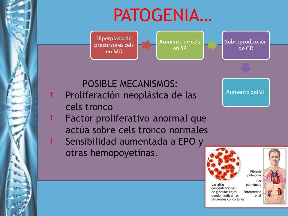 POSIBLE MECANISMOS: Proliferación neoplásica de las cels tronco Factor proliferativo anormal que actúa sobre cels tronco normales Sensibilidad aumenta
