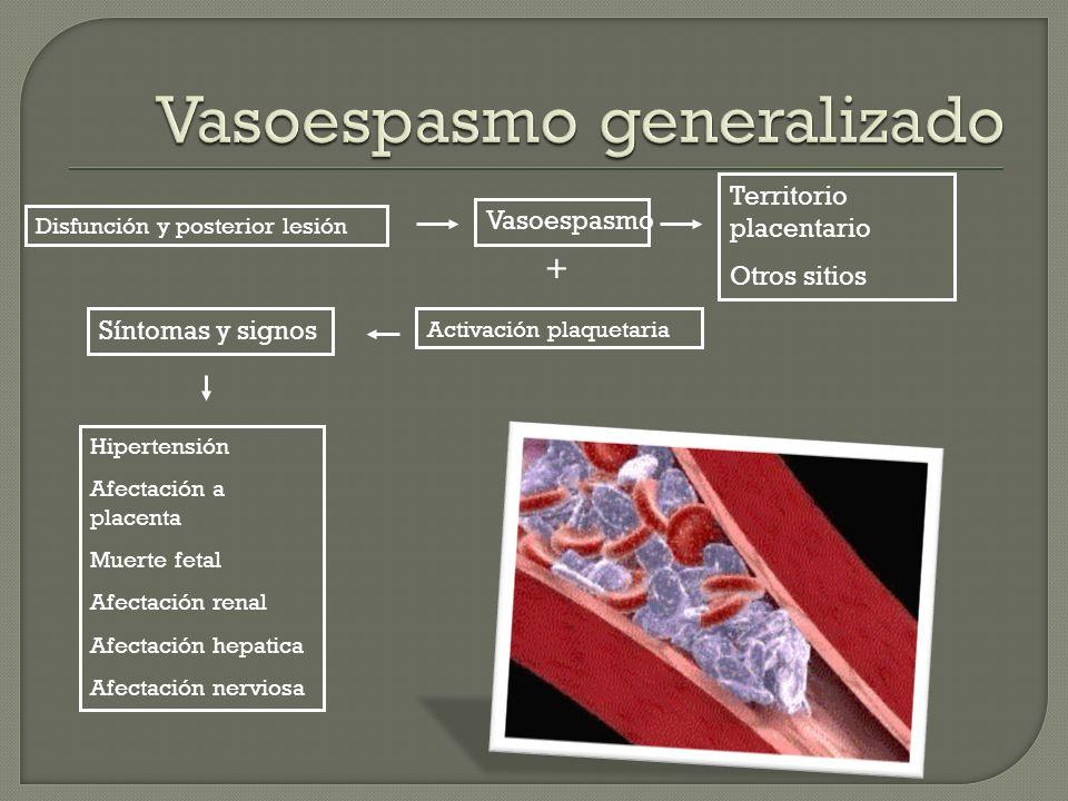 Disfunción y posterior lesión Vasoespasmo Territorio placentario Otros sitios + Activación plaquetaria Síntomas y signos Hipertensión Afectación a pla