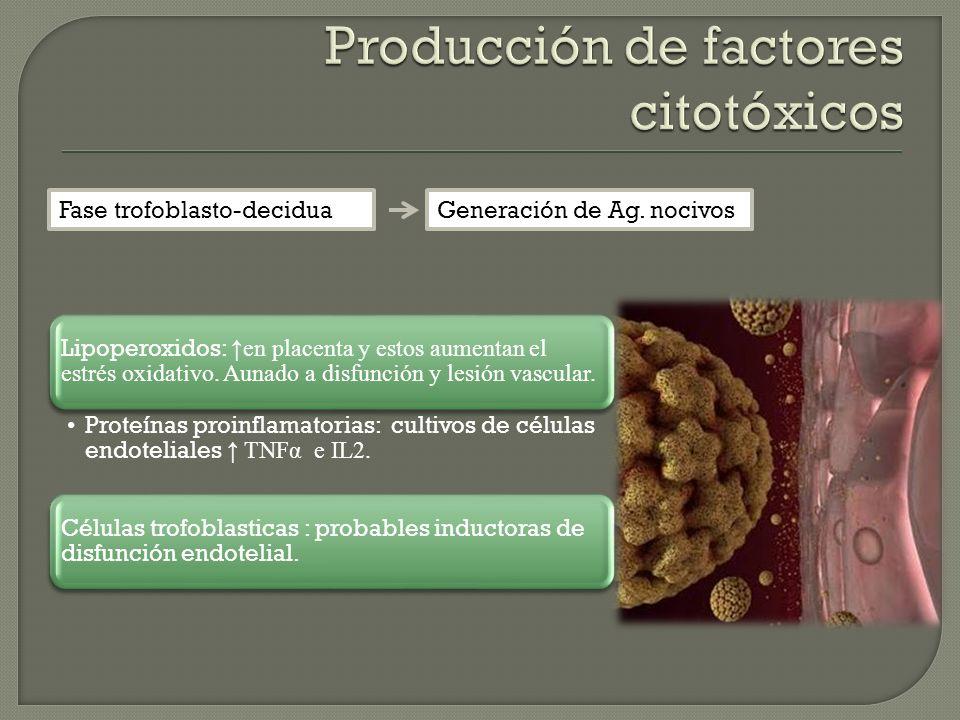 Fase trofoblasto-deciduaGeneración de Ag. nocivos Lipoperoxidos: en placenta y estos aumentan el estrés oxidativo. Aunado a disfunción y lesión vascul