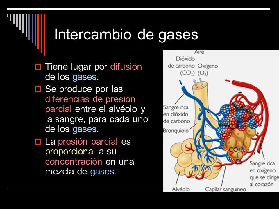 Intercambio de gases Tiene lugar por difusión de los gases. Se produce por las diferencias de presión parcial entre el alvéolo y la sangre, para cada