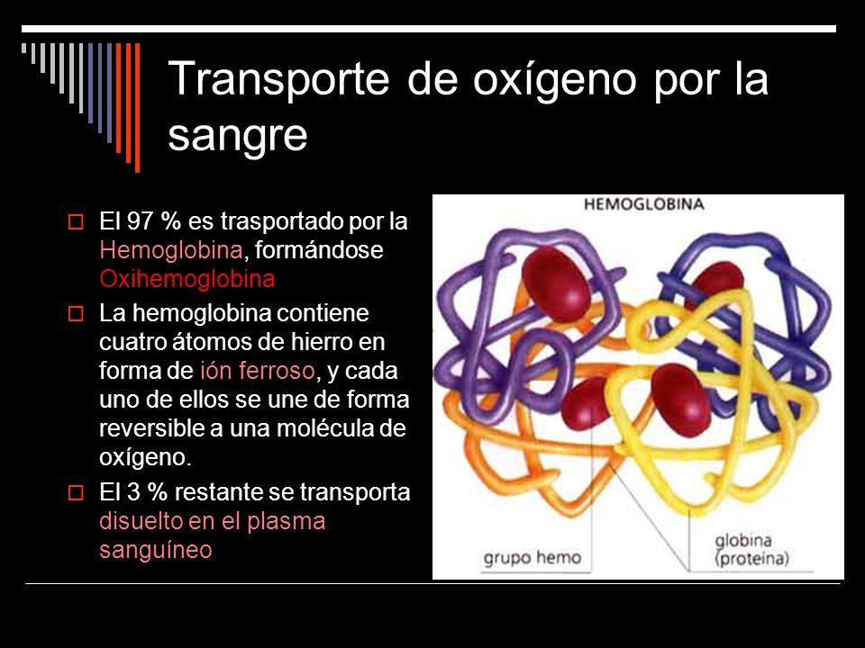 Transporte de oxígeno por la sangre El 97 % es trasportado por la Hemoglobina, formándose Oxihemoglobina La hemoglobina contiene cuatro átomos de hier