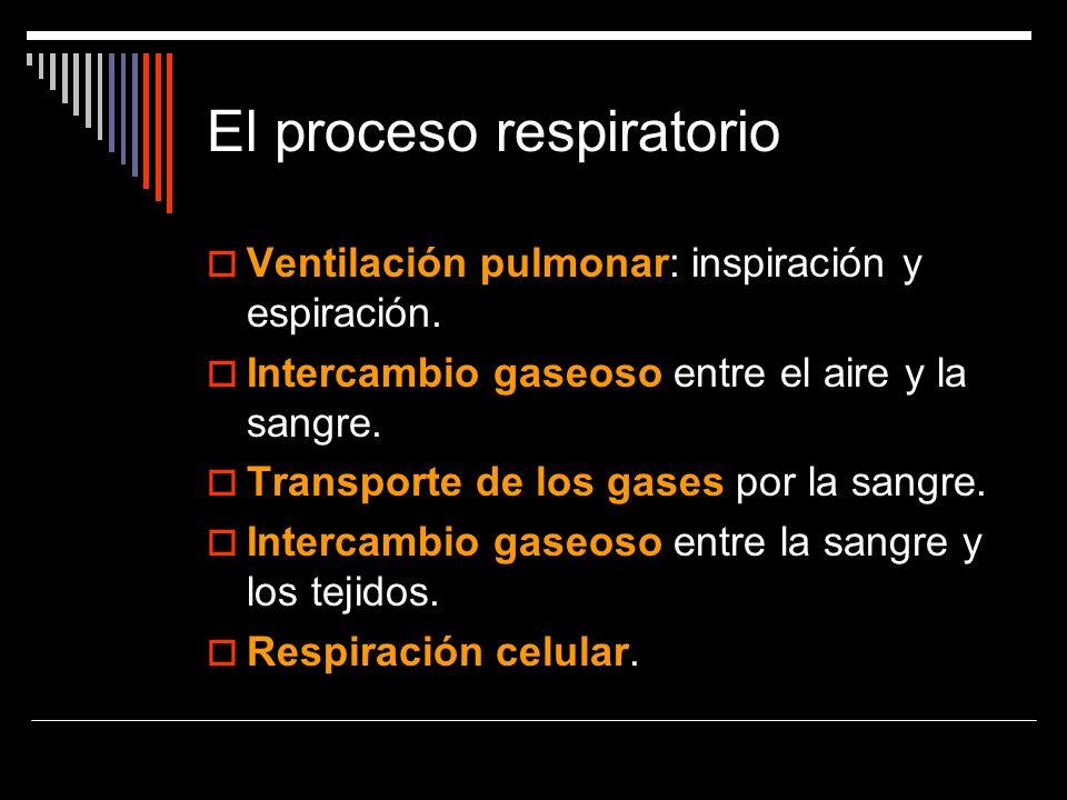El proceso respiratorio Ventilación pulmonar: inspiración y espiración. Intercambio gaseoso entre el aire y la sangre. Transporte de los gases por la