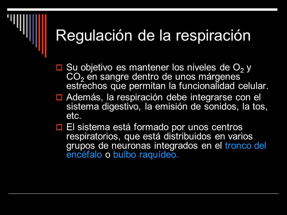Regulación de la respiración Su objetivo es mantener los niveles de O 2 y CO 2 en sangre dentro de unos márgenes estrechos que permitan la funcionalid