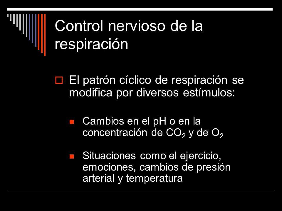 Control nervioso de la respiración El patrón cíclico de respiración se modifica por diversos estímulos: Cambios en el pH o en la concentración de CO 2