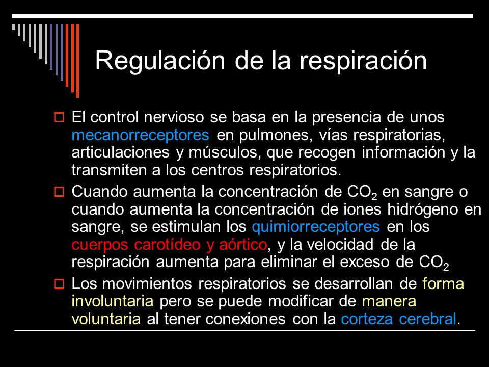 Regulación de la respiración El control nervioso se basa en la presencia de unos mecanorreceptores en pulmones, vías respiratorias, articulaciones y m