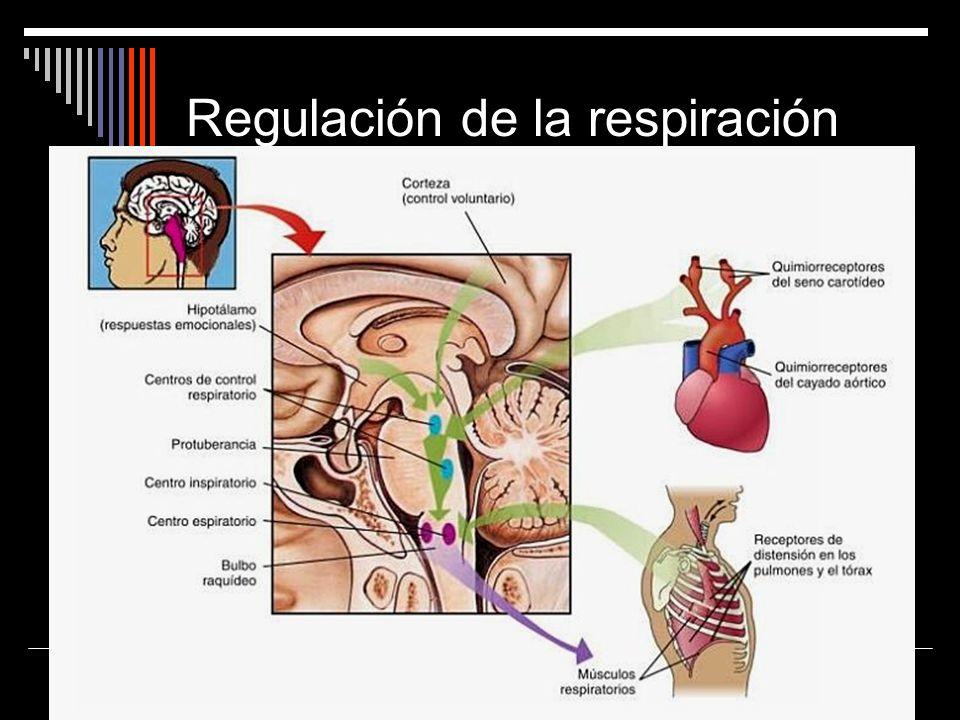 Regulación de la respiración