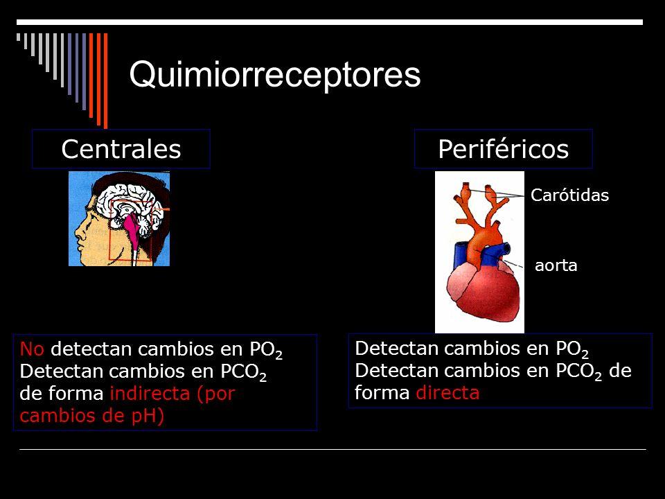 CentralesPeriféricos aorta Carótidas Detectan cambios en PO 2 Detectan cambios en PCO 2 de forma directa No detectan cambios en PO 2 Detectan cambios