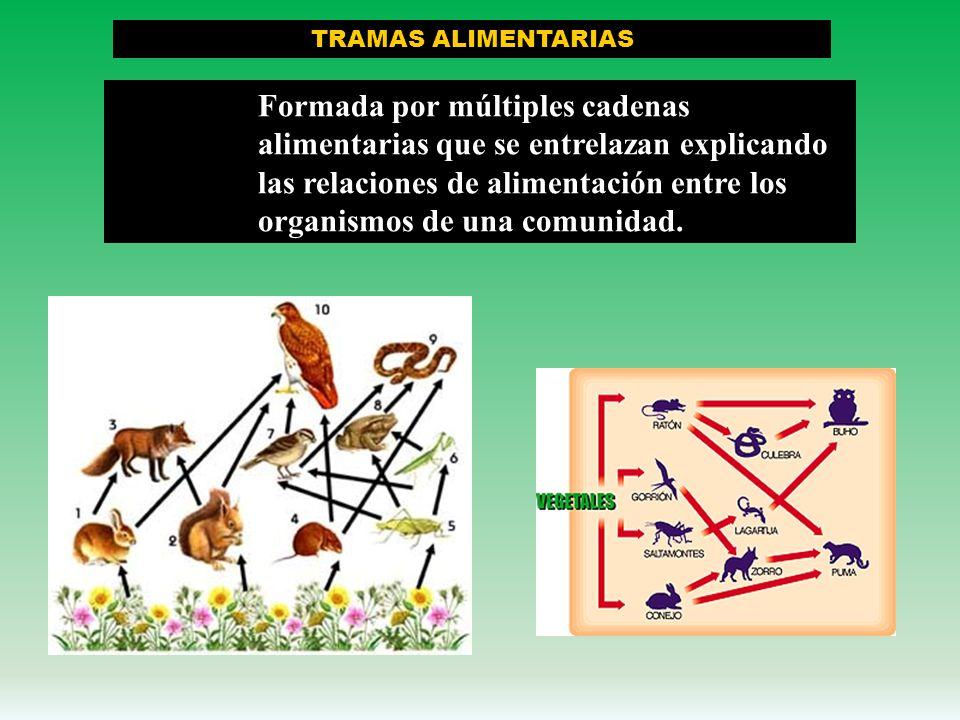 Descomponedores o reductores Las cadenas alimenticias siempre terminan con los descomponedores, seres generalmente pequeños, como los hongos, bacteria