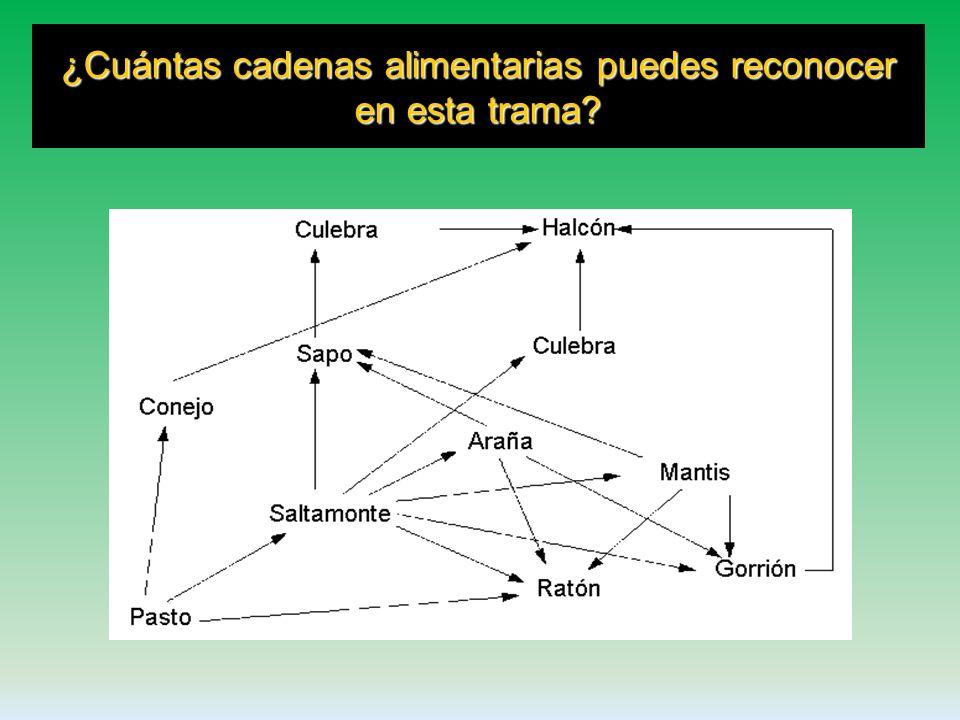 Formada por múltiples cadenas alimentarias que se entrelazan explicando las relaciones de alimentación entre los organismos de una comunidad. TRAMAS A