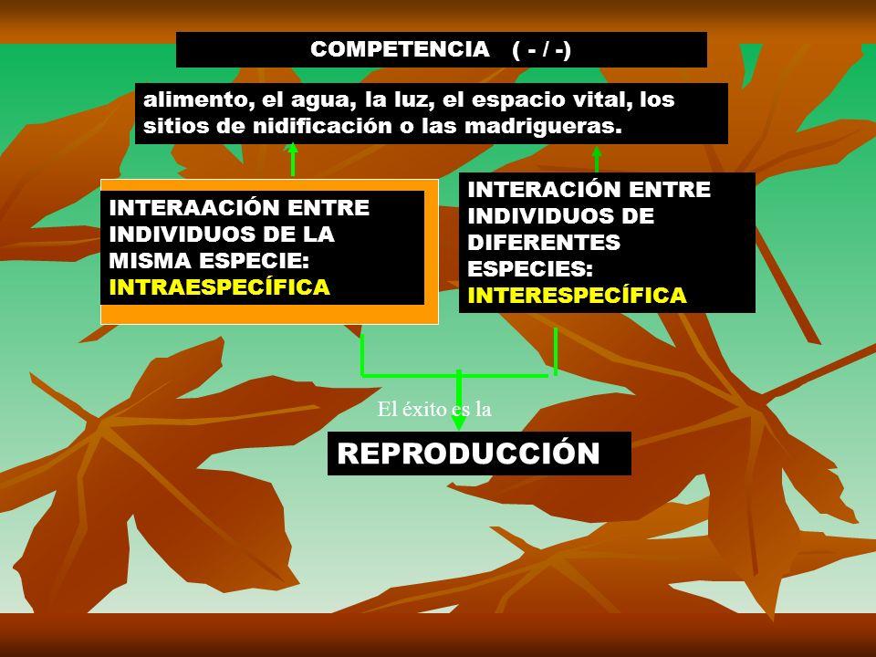 INTERAACIÓN ENTRE INDIVIDUOS DE LA MISMA ESPECIE: INTRAESPECÍFICA INTERACIÓN ENTRE INDIVIDUOS DE DIFERENTES ESPECIES: INTERESPECÍFICA REPRODUCCIÓN El éxito es la alimento, el agua, la luz, el espacio vital, los sitios de nidificación o las madrigueras.