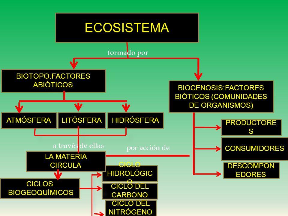 Relaciones Alimentarias: cadenas y tramas tróficas en el ecosistema
