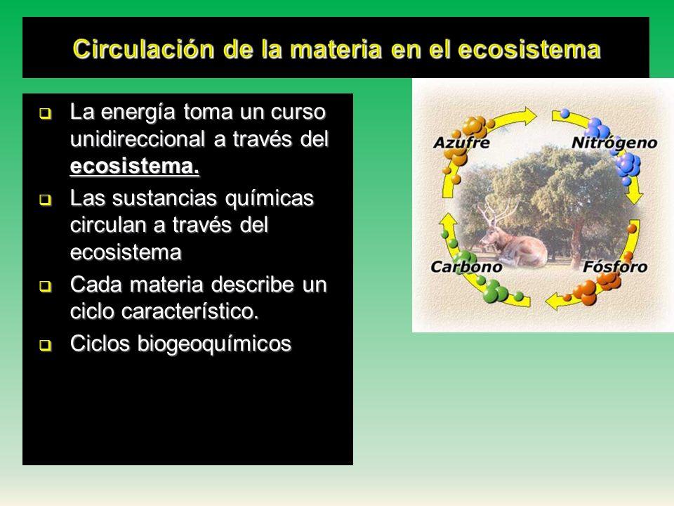 TRANSFERENCIA DE LA MATERIA Y LA ENERGÍA EN EL ECOSISTEMA LA ENERGÍA FLUYE POR LAS CADENA ALIMENTARIA EN UNA SOLA DIRECCIÓN DEBIDO QUE SE CONVIERTE EN