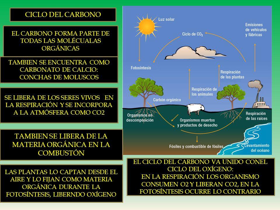 Ciclo del Agua 1. SE INCORPORA A LA ATMÓSFERA POR EVAPORACIÓN DE MARES, TRANSPIRACIÓN DE PLANTAS, ANIMALES, ETC. 2. EL AGUA ATMOSFÉRICA, SE CONDENSA,