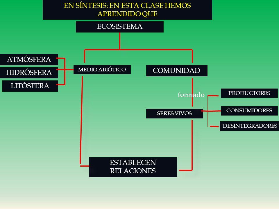 CICLO DEL NITRÓGENO: CONTINUACIÓN NITRIFICACIÓN: LAS BACTERIAS NITRIFICADORAS: TRANSFORMAN EL AMONIO EN NITRITOS Y NITRATOS LAS PLANTAS ASIMILAN LOS N