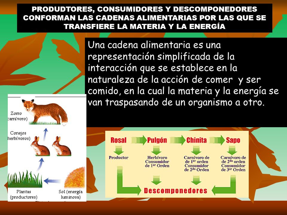Los vegetales no necesitan alimentarse de otros seres vivos, porque producen su alimento mediante el proceso de fotosíntesis. Por eso, son llamados pr