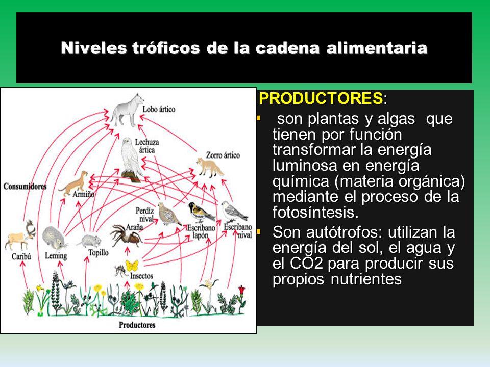 Una cadena alimentaria es una representación simplificada de la interacción que se establece en la naturaleza de la acción de comer y ser comido, en l