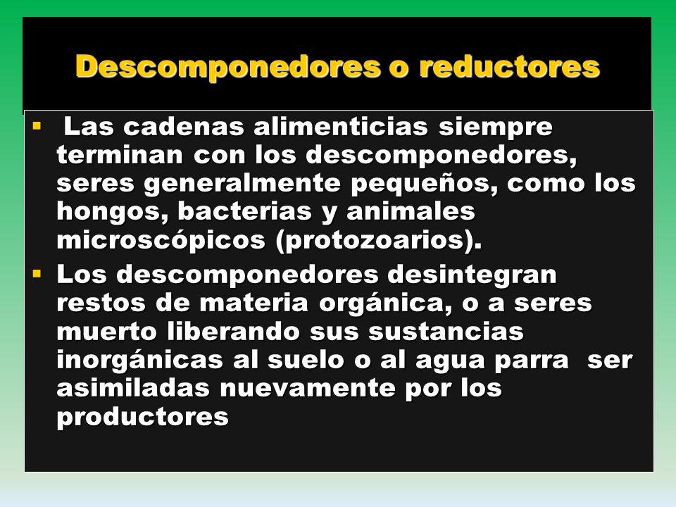 Consumidores: son los heterótrofos por que se alimentan de otros organismo, hay varios tipos Consumidores primarios: son los que se alimentan de veget