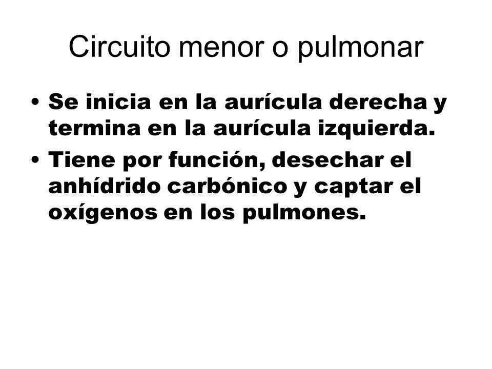 Circuito menor o pulmonar Se inicia en la aurícula derecha y termina en la aurícula izquierda. Tiene por función, desechar el anhídrido carbónico y ca