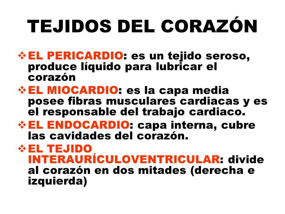 TEJIDOS DEL CORAZÓN EL PERICARDIO: es un tejido seroso, produce líquido para lubricar el corazón EL MIOCARDIO: es la capa media posee fibras musculare
