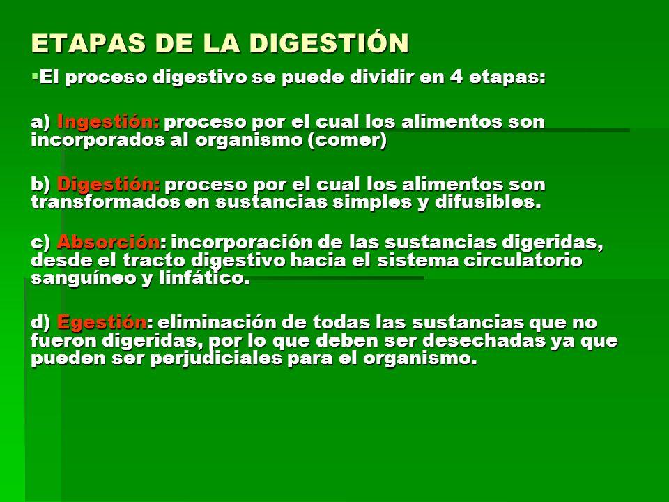 ETAPAS DE LA DIGESTIÓN El proceso digestivo se puede dividir en 4 etapas: El proceso digestivo se puede dividir en 4 etapas: a) Ingestión: proceso por