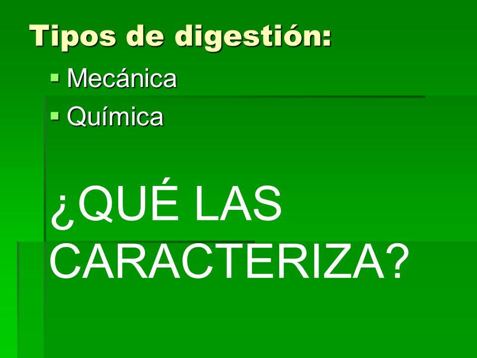 Tipos de digestión: Mecánica Mecánica Química Química ¿QUÉ LAS CARACTERIZA?