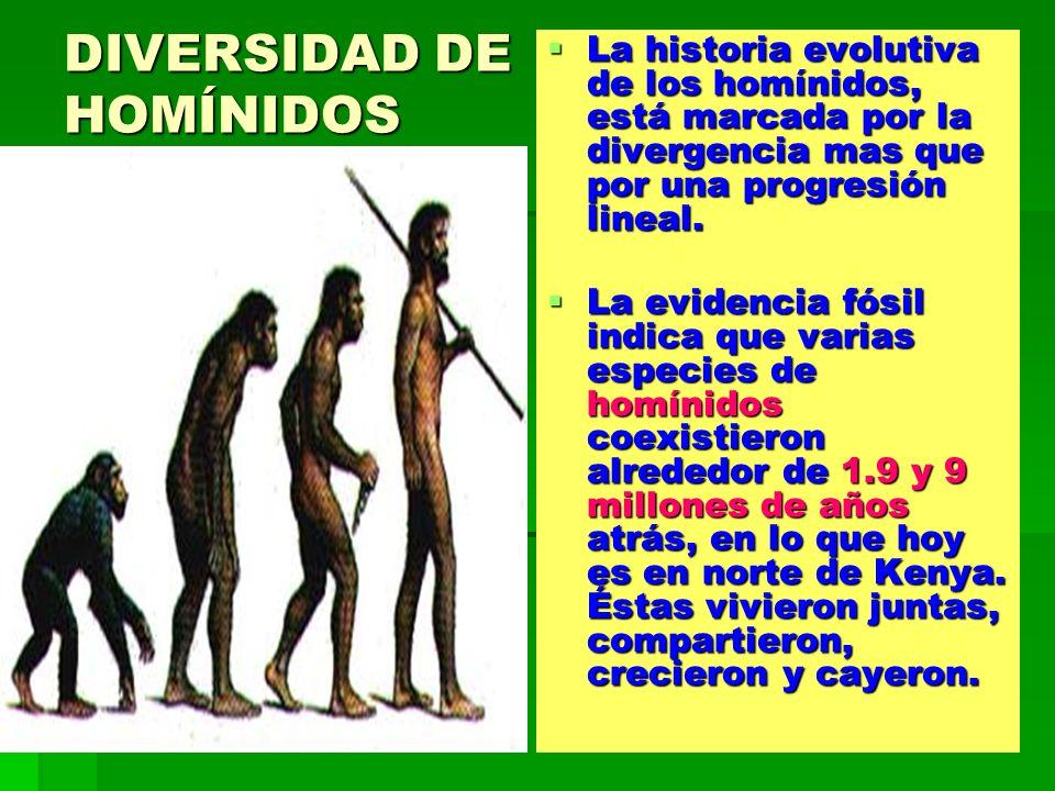DIVERSIDAD DE HOMÍNIDOS La historia evolutiva de los homínidos, está marcada por la divergencia mas que por una progresión lineal. La historia evoluti